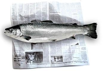 Image result for fishwrapper newspaper