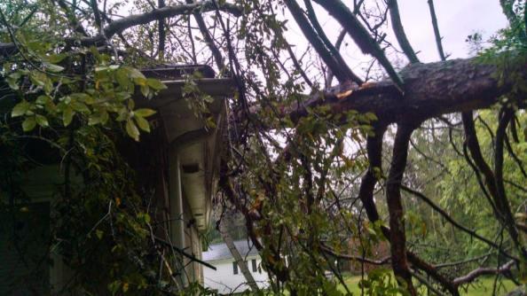 rain-brought-down-tree